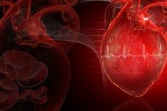 Coração humano Imagem de Stock Royalty Free