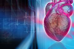 Coração humano Imagem de Stock