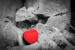 Coração vermelho em um tronco e em ramos de árvore Símbolo do amor Vermelho contra preto e branco Fotos de Stock