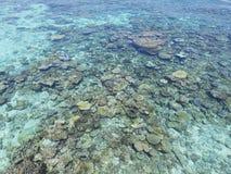 coraux Photographie stock libre de droits