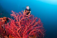 Coraux chez Bali Images stock