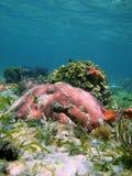 Coraux colorés avec l'étoile de mer Photo libre de droits