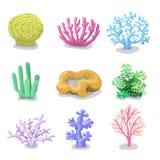 Coraux colorés, flore sous-marine de vecteur marin de nature de récif, faune Image libre de droits