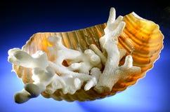 Coraux dans le coquillage Photo stock