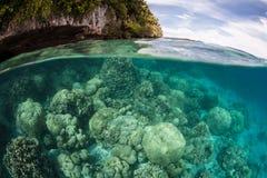 Coraux durs dans la lagune image stock