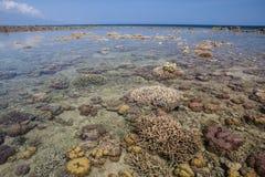 Coraux en eau peu profonde en Indonésie Photos stock