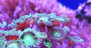 Coraux en mer tropicale sous-marine banque de vidéos