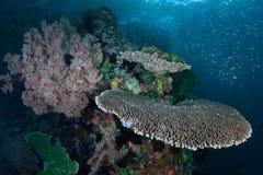 Coraux et d'autres invertébrés sur le récif sain en Indonésie photo stock