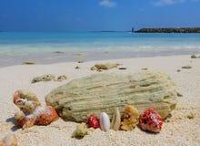 Coraux et mer Images libres de droits