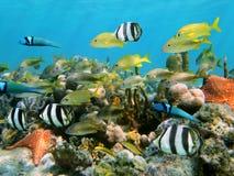 Coraux et poissons Photos stock