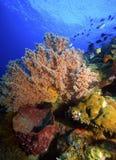 coraux mous Photographie stock