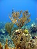 Coraux mous et plantes aquatiques image libre de droits