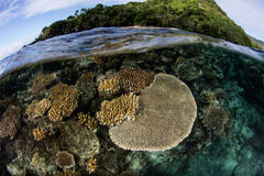 Coraux renforcement de récif photographie stock libre de droits