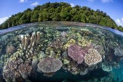 Coraux renforcement de récif en Solomon Islands Photos stock