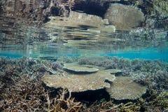 Coraux sains en Raja Ampat Image stock