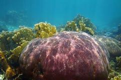 Coraux sous-marins Images libres de droits