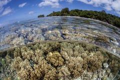 Coraux sur la barrière de corail des Palaos Photographie stock