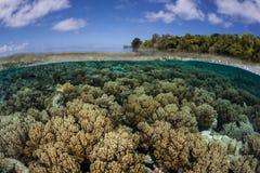 Coraux sur le bord de la barrière de corail Photographie stock