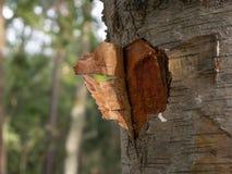 Corazón abstracto en corteza de árbol foto de archivo