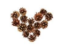 Corazón aislado de los conos del pino Imagen de archivo