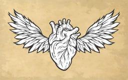 Corazón anatómico con símbolo de las alas Fotos de archivo libres de regalías