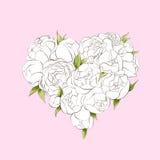 Corazón blanco de las peonías Imagenes de archivo
