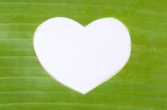 Corazón blanco en hoja verde del plátano imagen de archivo libre de regalías
