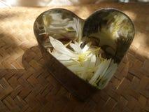 Corazón brillante por completo de pétalos blancos que caen Fotografía de archivo