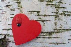 Corazón con el ladybug en fondo del tronco de árbol de abedul Imagen de archivo