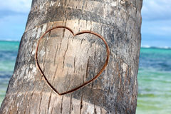 Corazón cutted en la palma Foto de archivo libre de regalías