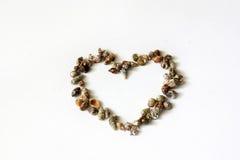 Corazón de conchas marinas Foto de archivo