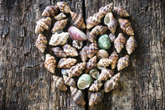Corazón de conchas marinas en un de madera Foto de archivo libre de regalías