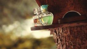 Corazón de cristal del verde del perfume del bosque de la primavera almacen de video