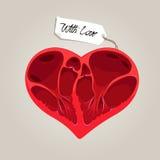 Corazón de la anatomía de las tarjetas del día de San Valentín Fotografía de archivo libre de regalías