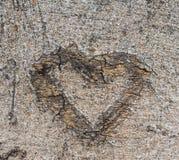 Corazón de la corteza. Fotografía de archivo