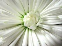 Corazón de la flor Imagen de archivo