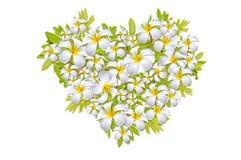 Corazón de la flor, día de tarjeta del día de San Valentín Foto de archivo