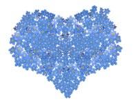 Corazón de la flor de la nomeolvides aislado en blanco Fotografía de archivo