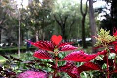 Corazón de la flor de las tarjetas del día de San Valentín Foto de archivo