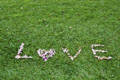 Corazón de la flora Fotografía de archivo