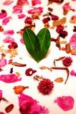 Corazón de la hoja Fotografía de archivo libre de regalías