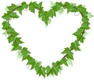 Corazón de la hoja de la hiedra Fotos de archivo libres de regalías