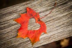 Corazón de la hoja del otoño Fotografía de archivo