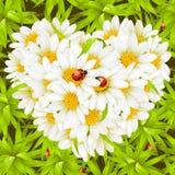 Corazón de la manzanilla, ladybugs y fondo inconsútil Fotografía de archivo libre de regalías