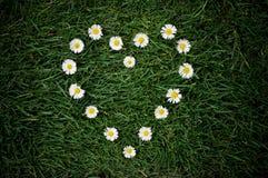 Corazón de la margarita Fotografía de archivo libre de regalías