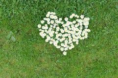 Corazón de la margarita Imagenes de archivo