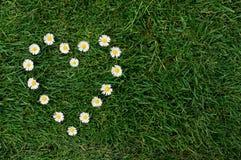 Corazón de la margarita en un prado Fotografía de archivo libre de regalías