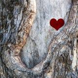 Corazón de la naturaleza Fotografía de archivo libre de regalías