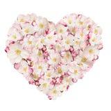 Corazón de la primavera Foto de archivo