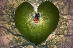 Corazón de la selva con el insecto de cuernos Imágenes de archivo libres de regalías